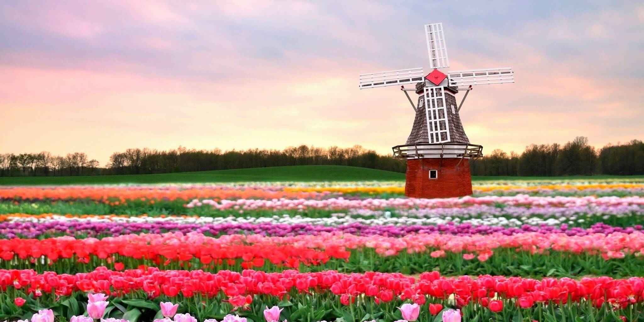 Cheap flights from Amsterdam